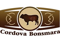 Cordova Bonsmara