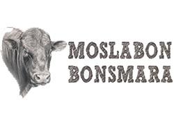Moslabon Bonsmara