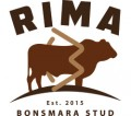 RIMA BONSMARA STUD - website write up.docx